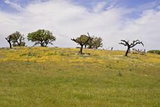 Free Spring Landscape Stock Photography - 5157172