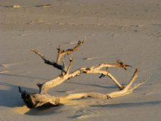 Free Driftwood Royalty Free Stock Photo - 5157525