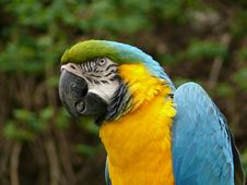Blue And Gold Macaw Stock Photos