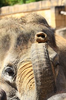 Free Elefants Stock Photo - 5158030