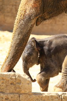 Free Elefants Stock Image - 5158241