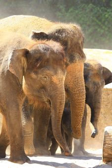 Free Elefants Stock Image - 5158441