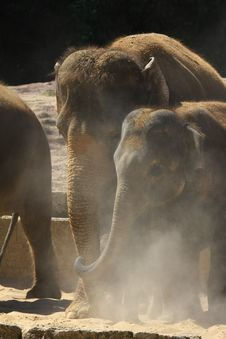 Free Elefants Royalty Free Stock Image - 5158536