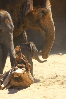 Free Elefants Stock Photography - 5158732