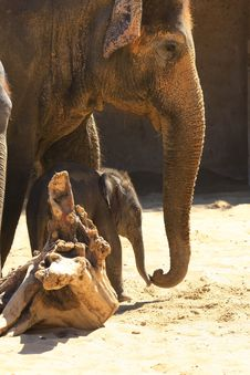 Free Elefants Stock Photos - 5158773