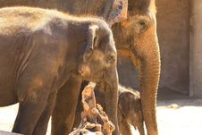 Free Elefants Stock Image - 5158831