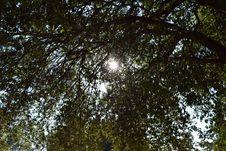 Free Sun Throw Tree Stock Image - 51500231