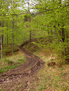 Free Forrest-road Stock Images - 5165384