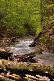Free Mountain River In The Forest Stock Photo - 5160140