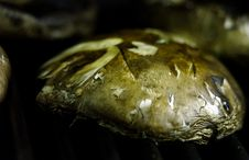 Free Portobello Mushroom Veggie Bbq Stock Photography - 5160442