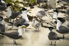 Free Family Of Terns Stock Image - 5164621