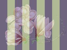 Free Striped Magnolia Royalty Free Stock Photos - 5165108