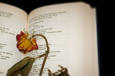 Close-up Of A Dried Rose On Open Book Pages Stock Photos