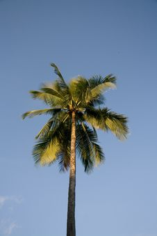 Free Palm Tree Stock Photos - 5166553