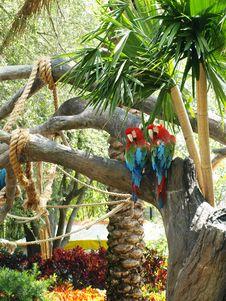 Free Parrot Pair Royalty Free Stock Photos - 5166968