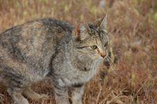 Curious Farm Cat Royalty Free Stock Photos