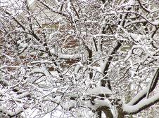 Free Winter Royalty Free Stock Image - 5169026