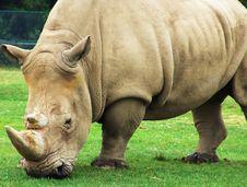 Free Rhinoceros Stock Images - 5169194