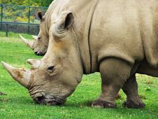 Free Rhinoceros Stock Photos - 5169223