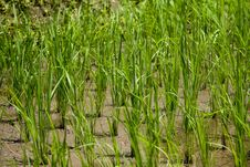 Free Blades Of Grass Royalty Free Stock Photography - 5169367