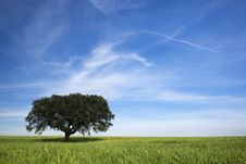Free Lonely Tree In Spring Landscape Royalty Free Stock Photography - 5169937
