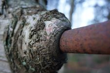 Free TREE EATING IRON Stock Photos - 51643133