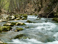 Free Forest River Royalty Free Stock Photo - 5170115