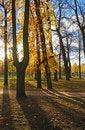 Free Sun Beams Through Autumn Park. Stock Image - 5172531