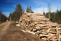 Free Cut Logs At The Edge Of The Forest Royalty Free Stock Image - 5174516