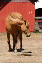 Free Chestnut Horse Near A Red Barn Royalty Free Stock Images - 5176459