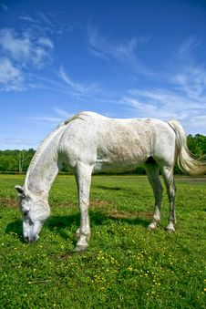 Free Horse Grazing In Field Stock Photography - 5171572