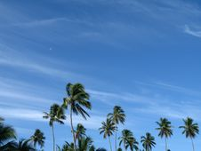 Free Palm Trees Royalty Free Stock Photography - 5172057