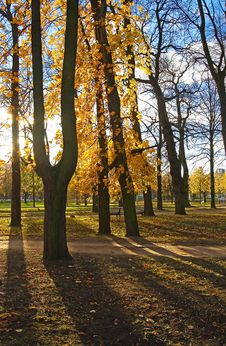 Free Sun Beams Through Autumn Park. Stock Image - 5172531