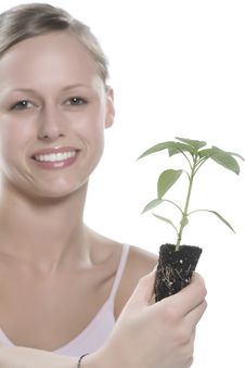 Free Young Woman Holding Young Sprout In The Hands. Royalty Free Stock Photo - 5172935