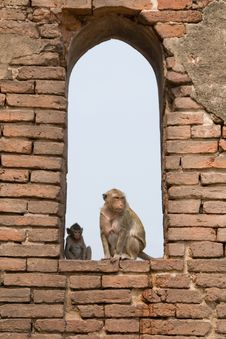 Free Monkeys In The Window Stock Image - 5173671