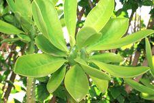 Free Cactus Stock Photo - 5174190