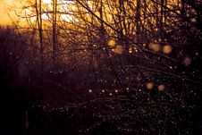 Free Dew On Dark Branches Royalty Free Stock Photography - 5174337