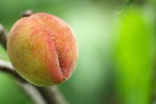 Free Peach Stock Photos - 5174633