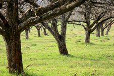 Free Trees Stock Image - 5174691