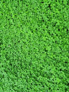 Free Green Grass With Bead Stock Image - 5174971