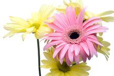 Free High Key Flowers Stock Image - 5176521