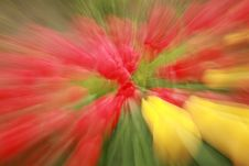 Free Tulip Zoom Burst Stock Photo - 5178040