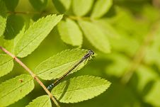 Free Dragonfly Royalty Free Stock Images - 5179119