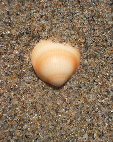 Free Beach Seashells Royalty Free Stock Photos - 5179518