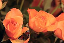 Free Bunch Of Roses 2 Royalty Free Stock Images - 5179679