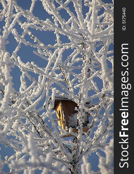 Bird box in the tree top