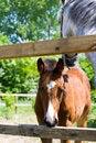Free Baby Horse Royalty Free Stock Photo - 5180265