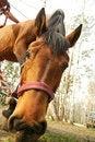 Free Feeding Horse Closeup Stock Photos - 5186883