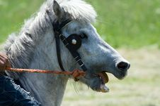 Free Horse Head-Pony Stock Photos - 5180063