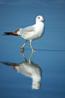 Free Gull On The Beach Royalty Free Stock Photography - 5180437